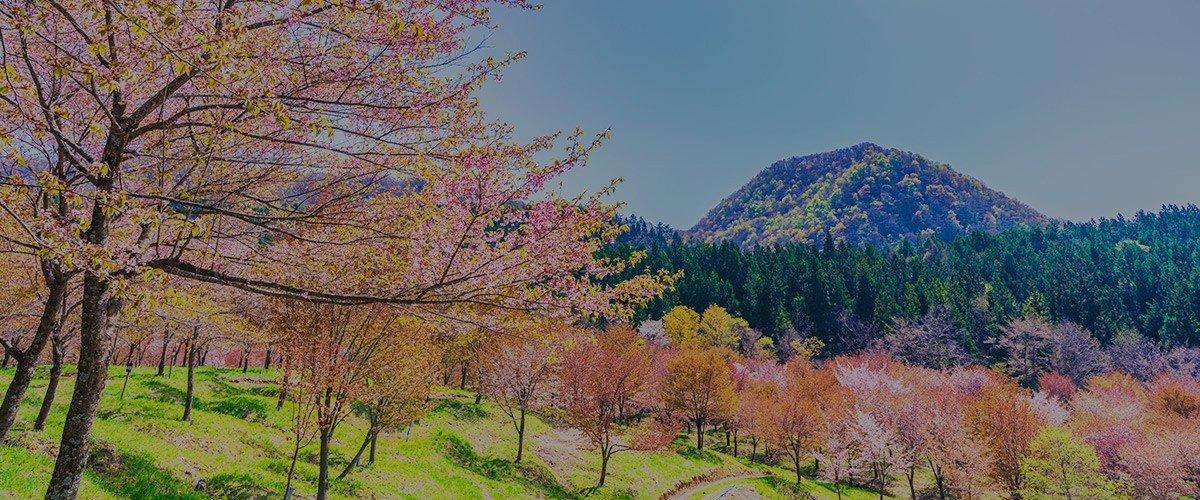 福島県 裏磐梯 桜峠